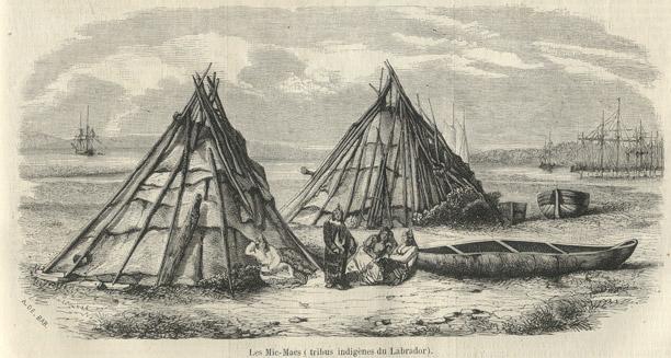 Levures indigènes : révélatrices de terroir mais pas que !