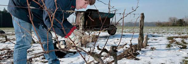 Mes 10 raisons de passer aux vins d'artisans vignerons !